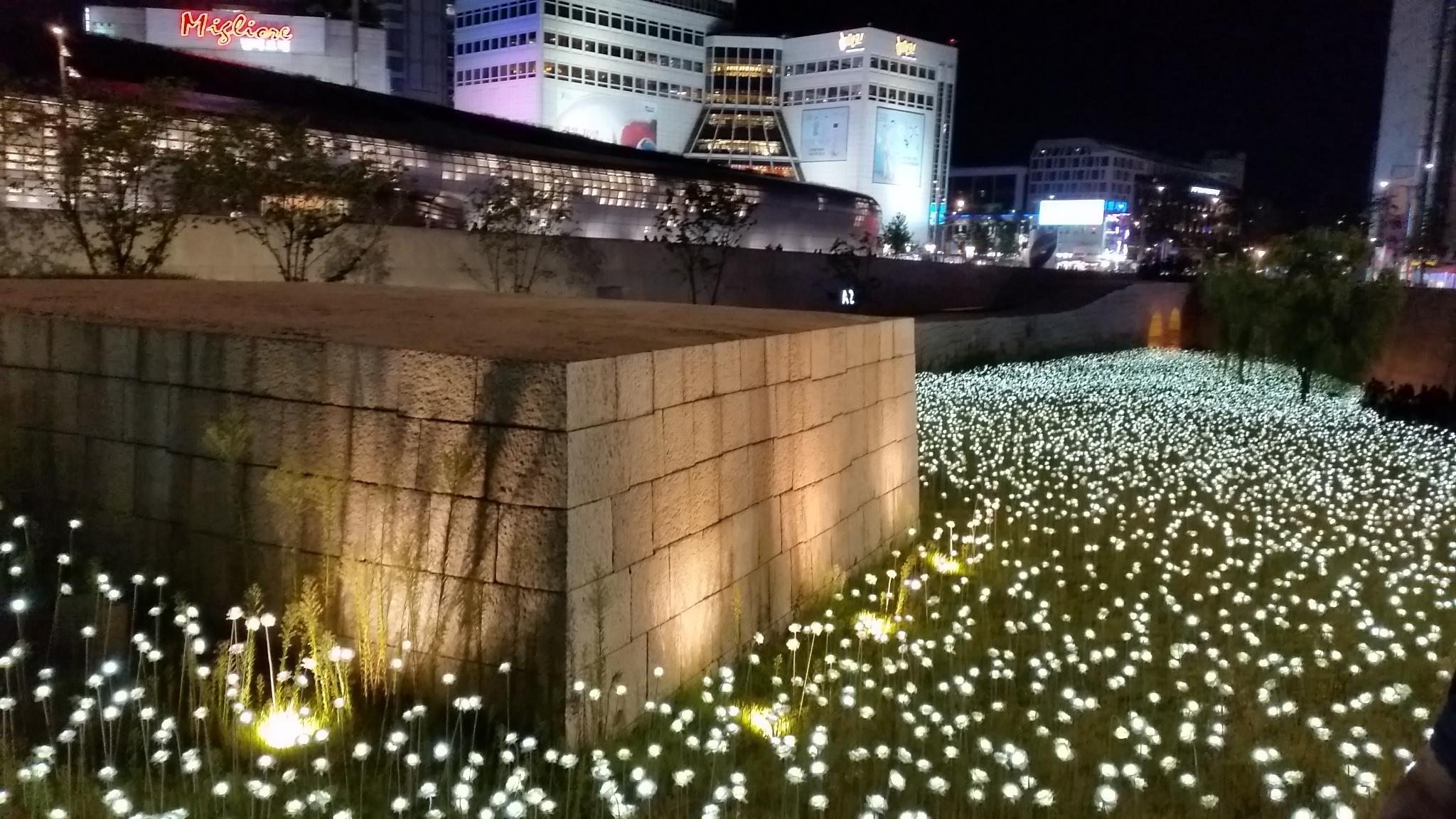 東大門デザインプラザ(DDP) LEDバラ庭園
